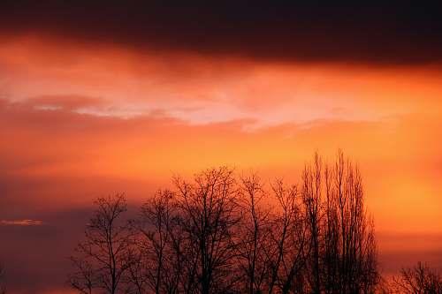 sky silhouette photo of leafless trees sunrise