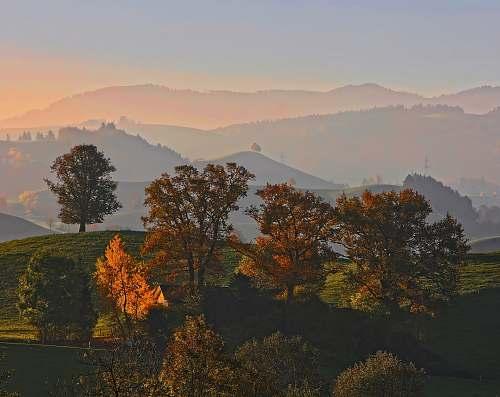 sunrise trees on top of mountain sky