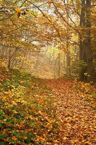 forest autumn leafed trees autumn
