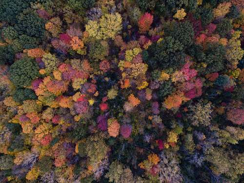 autumn bird's eye view photo of green leafed trees cabbage