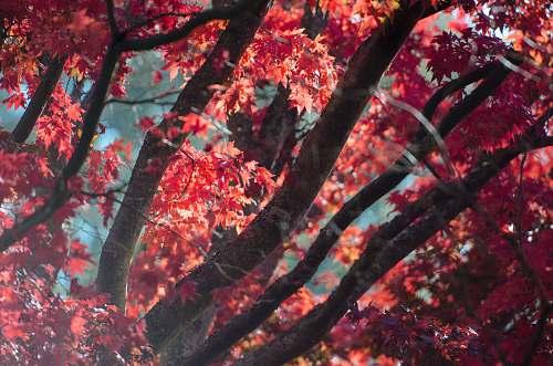branch close up photo of maple tree foliage