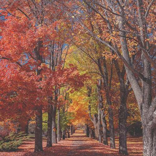 fall concrete pathway near red and yellow leaf tree trees
