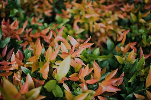 flora depth photography of green and brown leafed plants plant