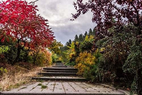 garden gray concrete stair in between forest path