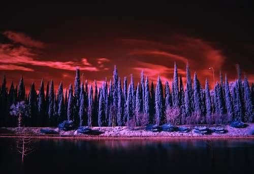 winter landscape photography of blue trees landscape