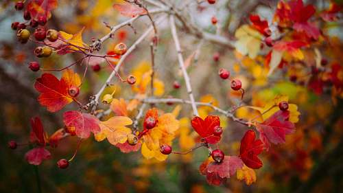 autumn photo of red and yellow flowers fall