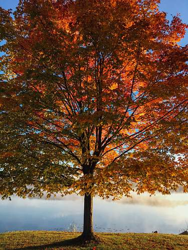autumn red and brown leafy tree at daytime fall