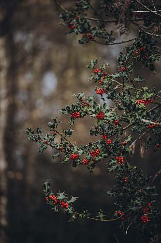bush shallow focus photo of red fruit blossom