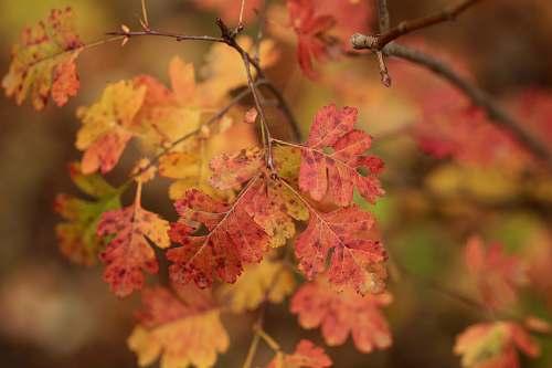 leaf wilted leaves veins