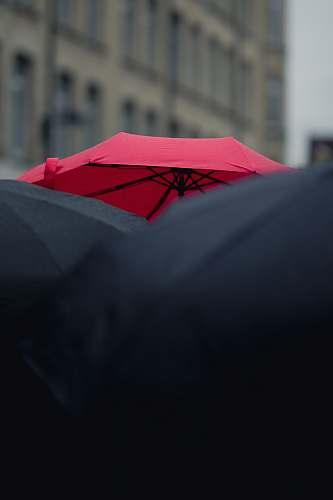 cambridge closeup photography of black and red umbrellas united kingdom