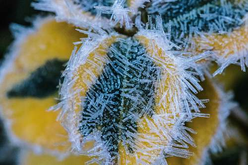 nature ice forming on flower outdoors
