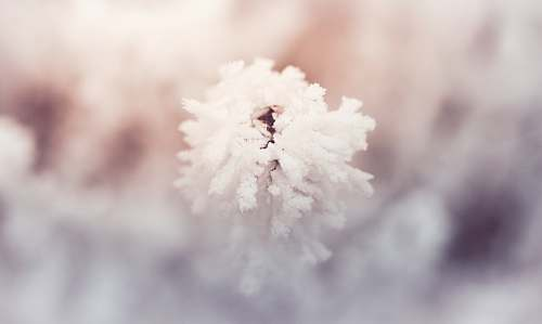 nature white cotton in close up photography ice