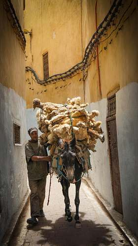 person horse carrying dolls on pathway with a man animal
