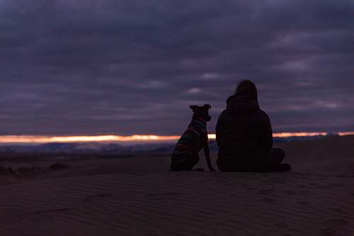 human man and dog sitting on sand during sunset person
