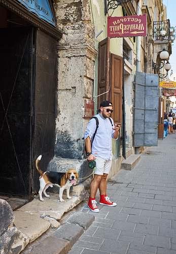 beagle man beside beagle near building structure dog