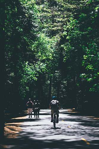 human person riding bicycle between trees person