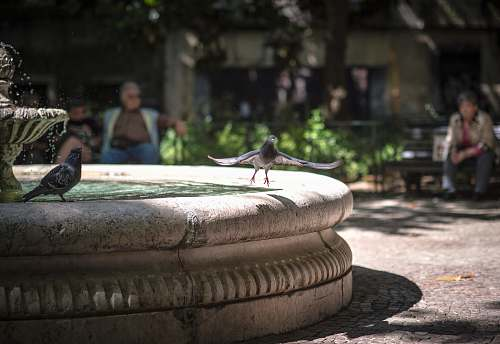 person pigeon about to fly away from outdoor water fountain human