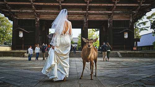person woman in wedding dress standing beside deer human