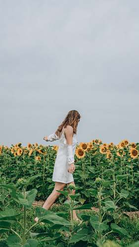 human woman standing beside bed of sunflower person