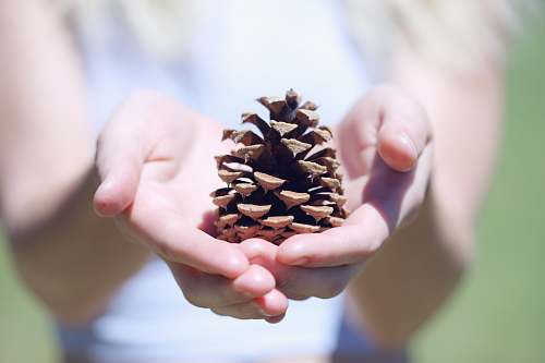people person showing brown pine cone plant