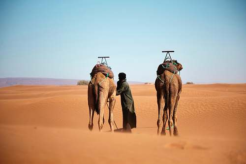desert person walking with two camels on desert during daytime nature
