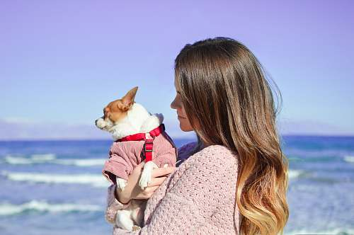 people woman holding white dog on seashore human