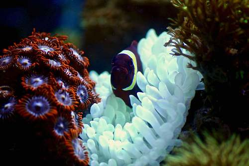 water purple and white fish on coral reef invertebrate