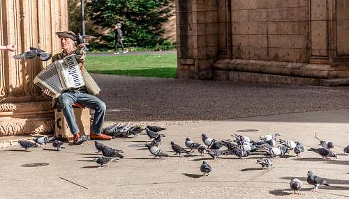 shoe man playing accordion surrounded by pigeons footwear