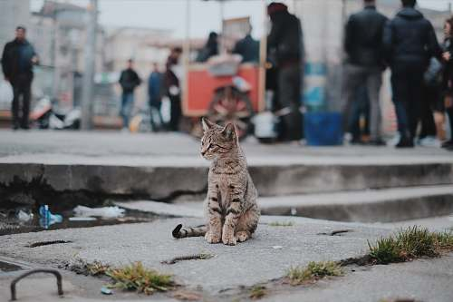 cat brown tabby cat sitting on concrete animal