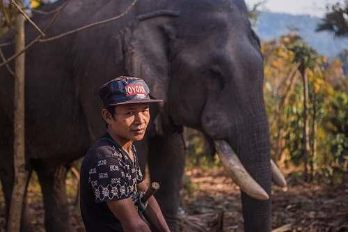 wildlife man sitting near black elephant elephant