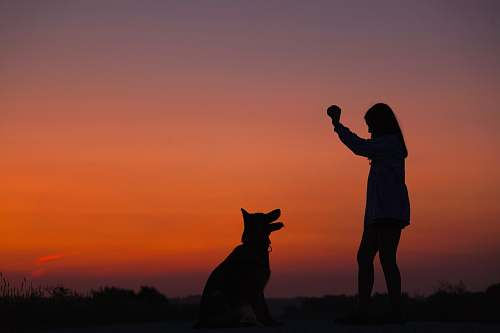 person woman holding ball in front of dog silhouette photography silhouette
