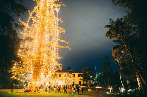 urban yellow Christmas tree with string lights outdoor decor downtown