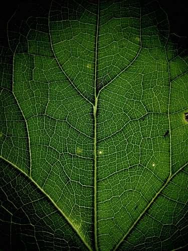 plant close up photo of leaf leaf