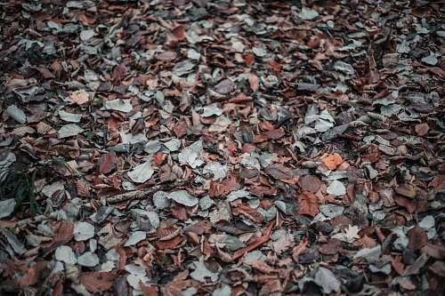 leaf dried leaves plant