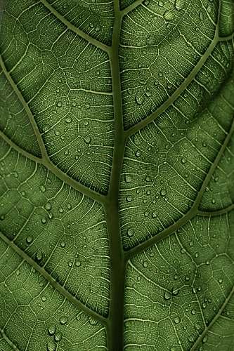 veins  green