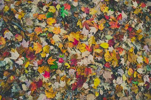 fall assorted-color leaves on ground painting