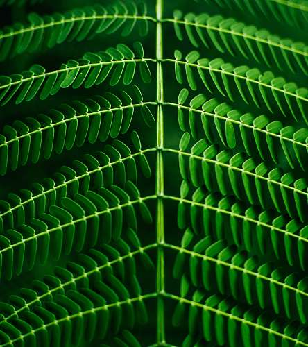 green macro photography of green leafed plant plant