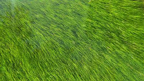 green green grass field grass