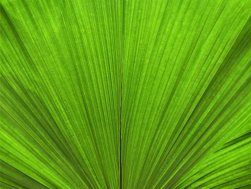 green green leaf in close up photography leaf