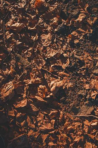 military macro photography of brown leaves on ground military uniform