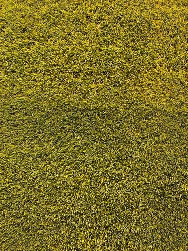 grass  bayarena
