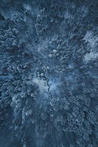rug birds eye view of snow covered trees pattern