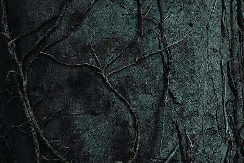 slate black tree branch on black textile rock