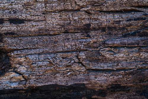 wood brown tree bark rock