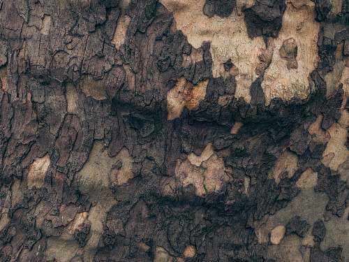 nature brown tree trunk cave