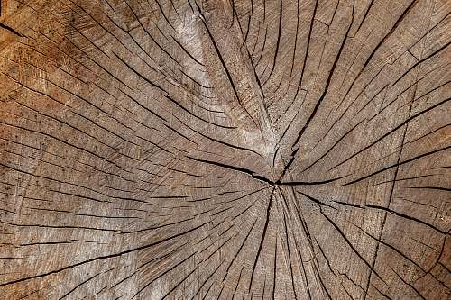 plant brown wooden surface close-up photography wood