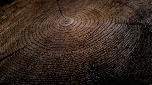 wood Close-up of growth rings in a thick tree stump tree
