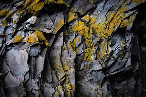 nature gray concrete wall sea life