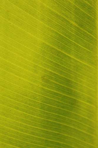 green green and white striped textile leaf