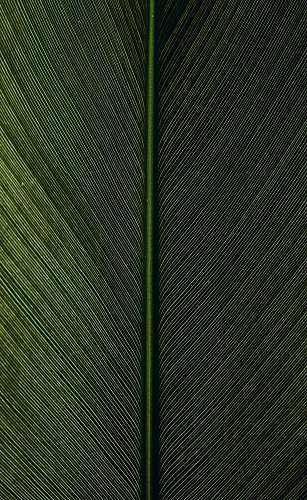 nature green metal rod on black and white pinstripe textile green
